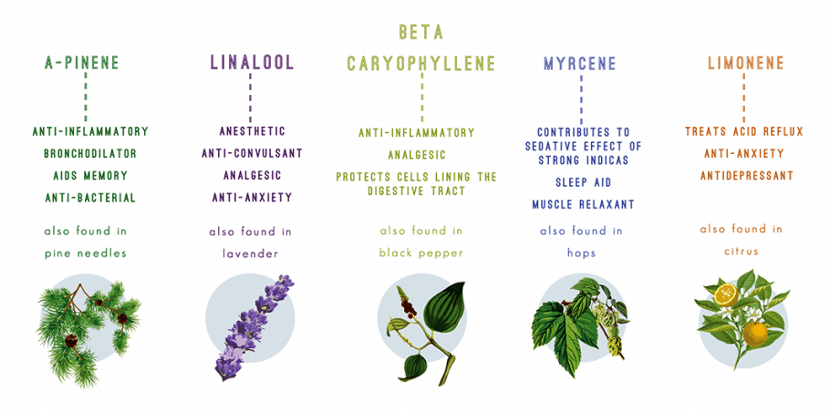 The Role of Terpenes in Cannabis: