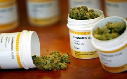 Varieties Cannabis