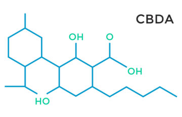 cannabidiolic acid form CBDa