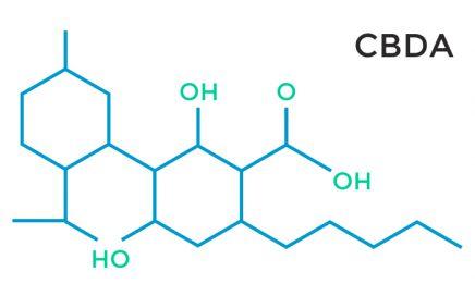 cannabidiolic acid form CBDa